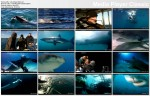 Jak poluj± rekiny? / Sharks: Anatomy of an Attack (2009) PL.TVRip.XviD / Lektor PL