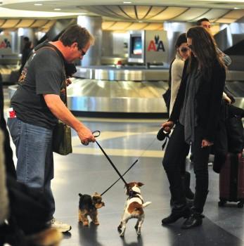 Эмми Россам, фото 3321. Emmy Rossum Looks Great with Her Dog LAX 2/17/12, foto 3321